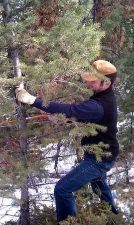 Bryan cutting the Christmas Tree