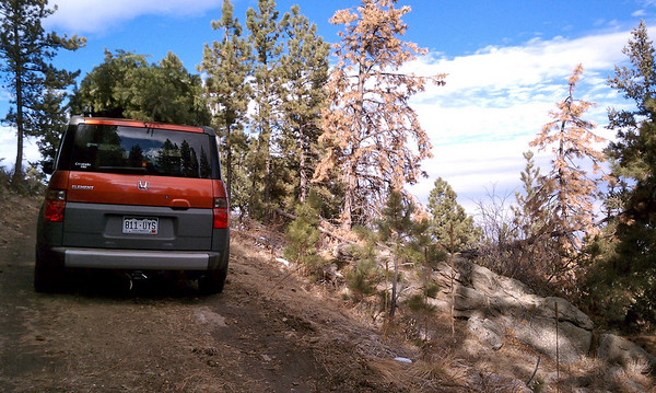 Honda Element on forest roads getting christmas tree